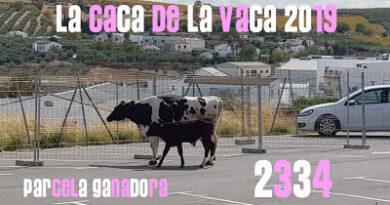 PARCELA GANADORA «LA CACA DE LA VACA»